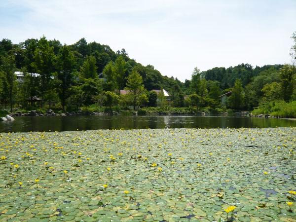 レイクニュータウン別荘地の様子①:整備された美しいレマン湖です。