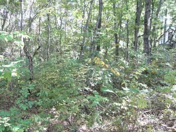 敷地内には立派な樹木がたくさん茂っています。
