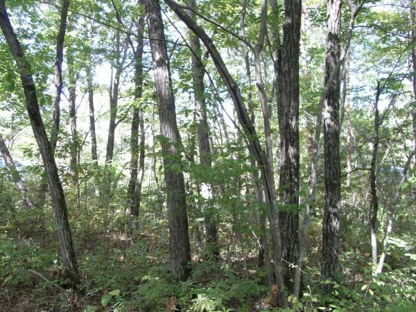 樹木が立ち並び、森の中での生活を楽しめます。