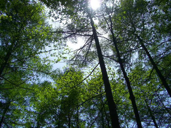 木漏れ日の中でリゾートライフはいかがでしょうか。