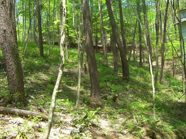 木立の中でのんびり森林浴!!
