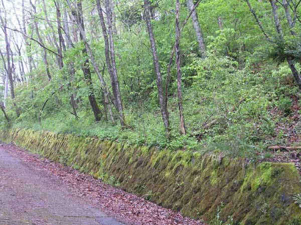 落葉樹林と石垣のコケの緑が落ち着いた別荘ライフを。