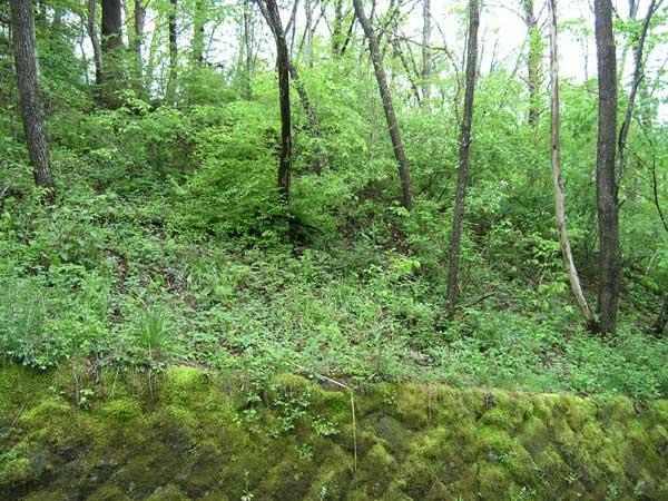 コナラ、ケヤキ等の雑木の中、シャラ、萩、山吹等の中低木、山野草が楽しめます。