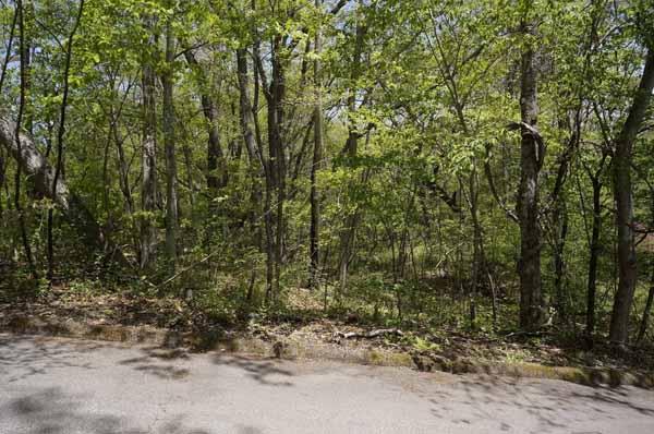 木肌の明るい木がたくさんあります。