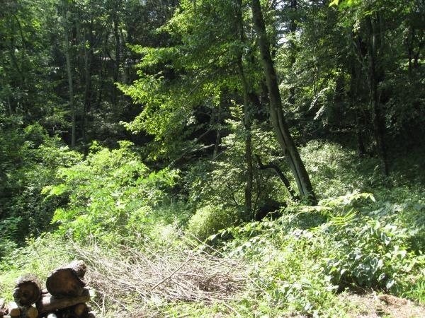 物件のご様子:180度森に囲まれ周囲の目線も全く気になりません。