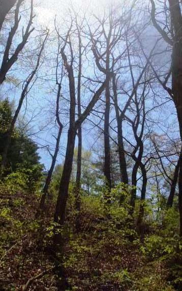 雰囲気が良い木々が立ち並びます。