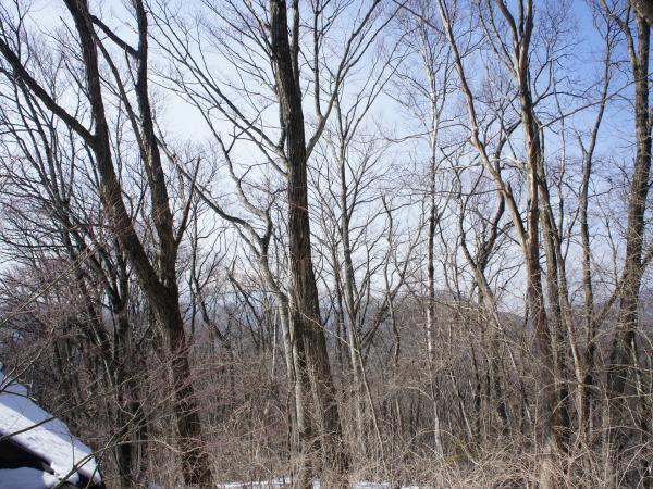 写真では見えないですが、浅間山が北側に見えます。