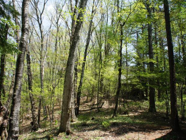 北側は非分譲の森が広がっています。