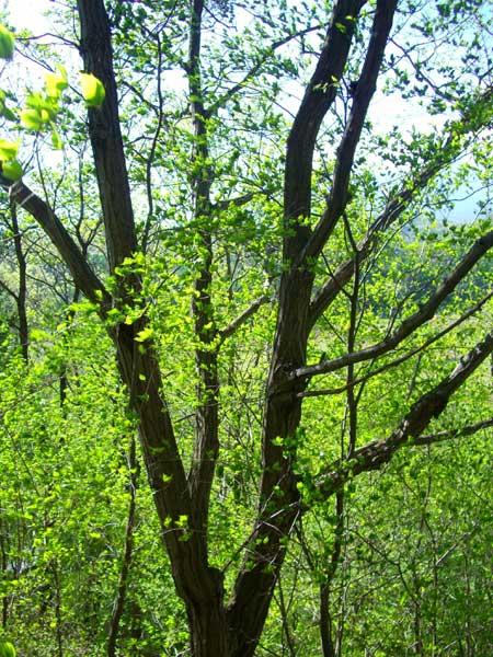 立派な木もあります。