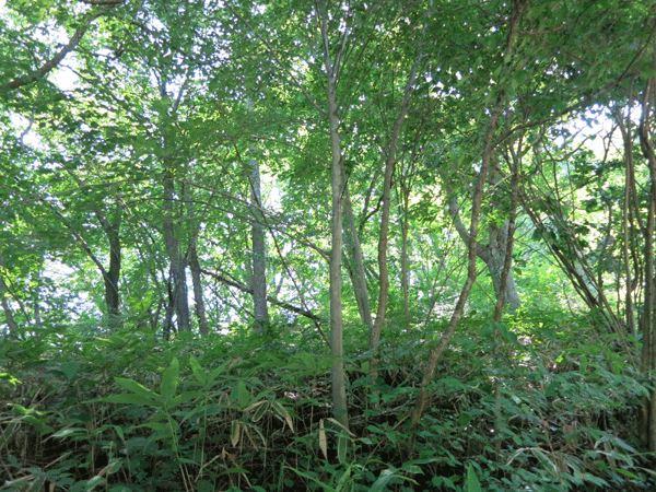 木がたくさんあるので、お好みの木を残して建築できます。