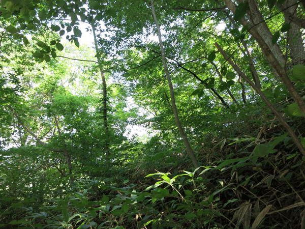 軽井沢の自然を堪能していただけます。