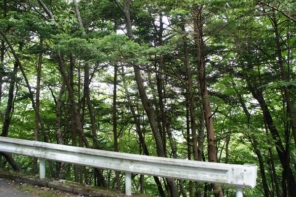 森の向こうにかすかに見えるのは旧軽井沢ゴルフクラブ。