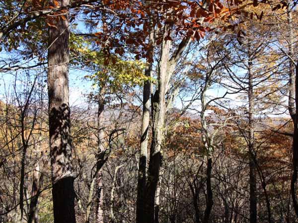 木々の間から山並みが見えます。秋は唐松の紅葉がとてもきれいです。