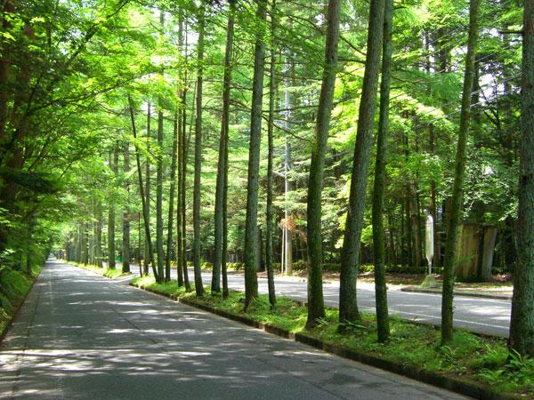 まっすぐと整列した唐松並木が美しい三笠通り