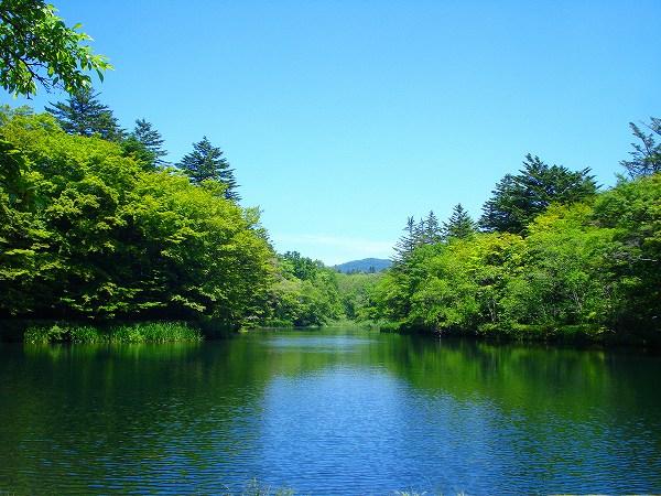 雲場池まで車で約10分(約5km)旧軽井沢を代表する観光名所です。