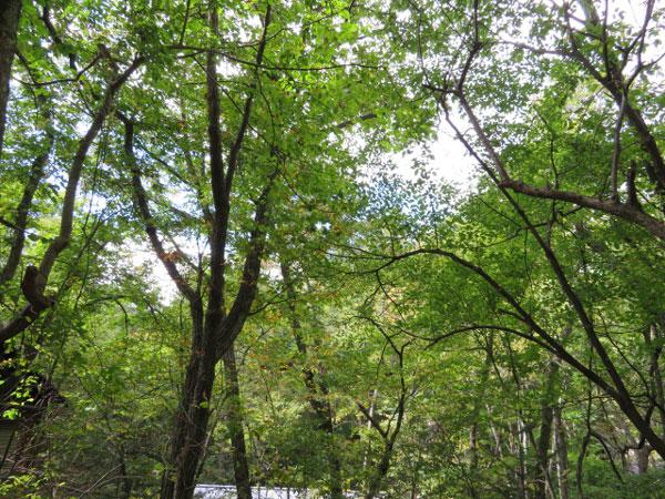 木々も多くあるので、選定して残して、軽井沢らしい別荘環境を整えましょう!
