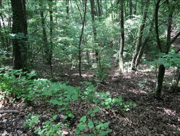 藪を刈り立派な木を残すことで敷地内をより別荘らしくアレンジできますね。