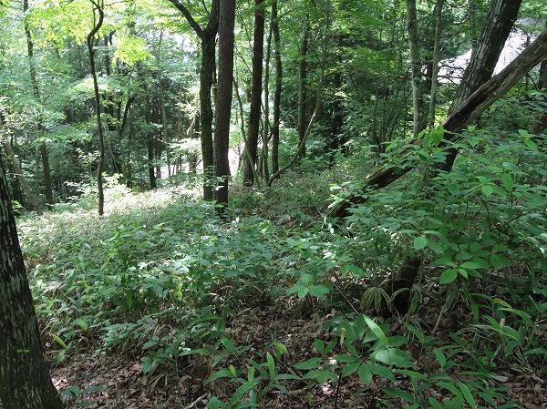 緑豊かで閑静な別荘地です。小鳥のさえずりが聞こえ心癒されます。