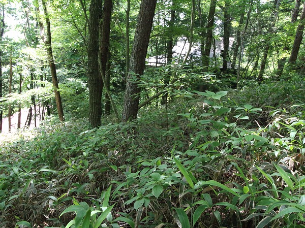 周りが木々に囲まれているので、避暑地として安らげる場所になるのではないでしょうか。