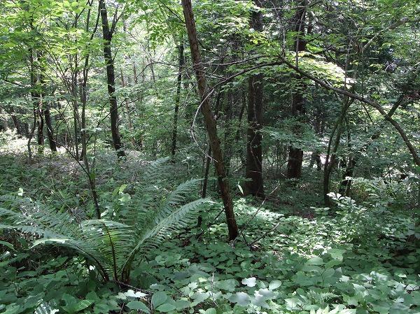立派な木々がたくさんあって涼しい環境。
