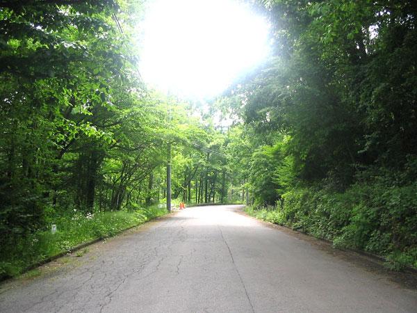夏の別荘地内の道路です。