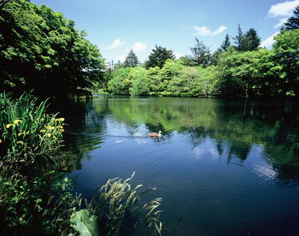 四季折々の姿で楽しませてくれる雲場池。特に人気は紅葉シーズンです。約4.9㎞車で約12分です。