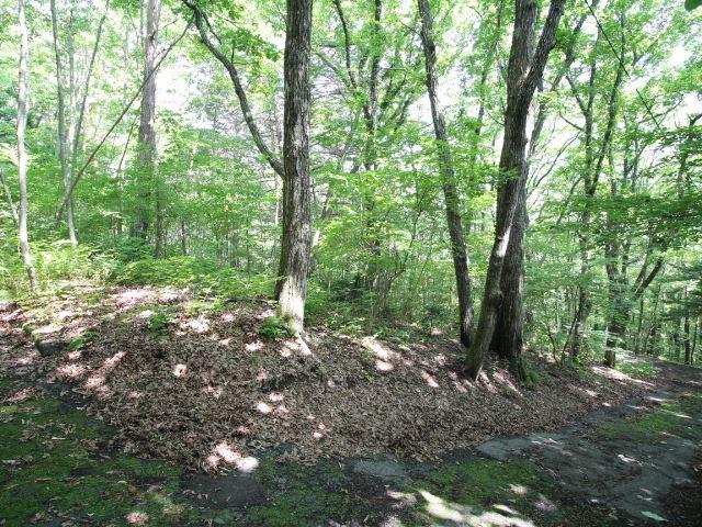 3方角地、木漏れ日が美しい旧軽井沢の森!