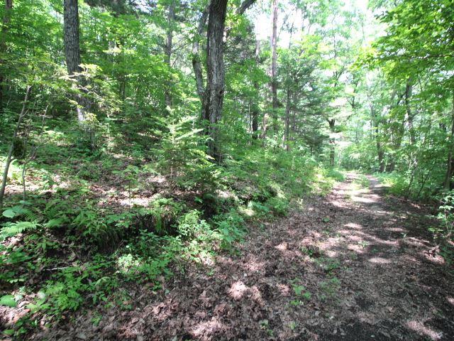 ナラやクルミ、栗の木など様々な木が自生している敷地内。