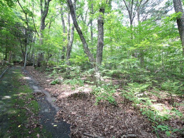苔生した道と木漏れ日の美しい土地。