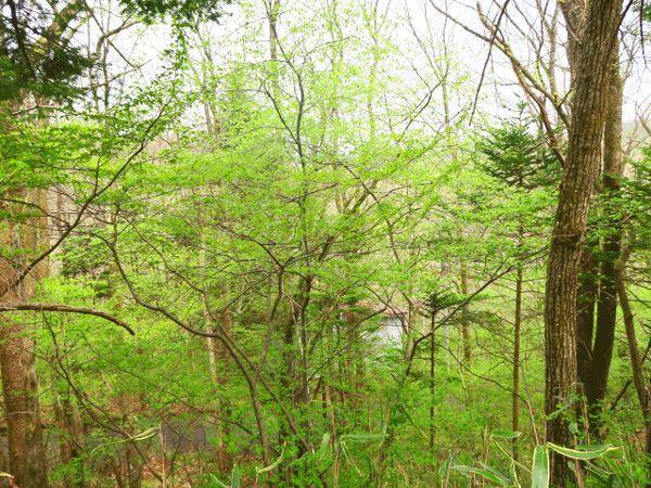 細かな藪を払うことで、立派な木々をより印象的にすることができます。