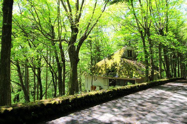 旧軽井沢銀座まで約1km!木々に囲まれた高台!