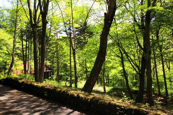 周囲は広葉樹に針葉樹と様々な木々が連なります。