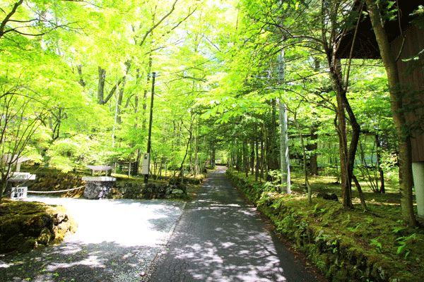 敷地に向かう途中にはこれぞ旧軽井沢というような風景がございます。