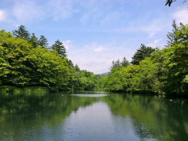 新緑の季節の雲場池の様子。四季それぞれの表情がご覧いただけます。