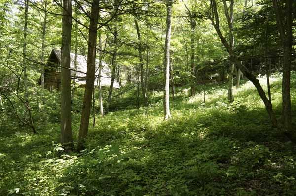 北側の様子。木漏れ日がきれいな森です。