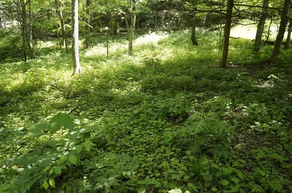 歩きやすい緩やかな傾斜です。建物のプランによっては平坦なお庭も作れます。