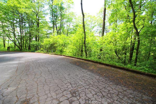 前面道路は舗装してあり、年間通じての通行も可能です。