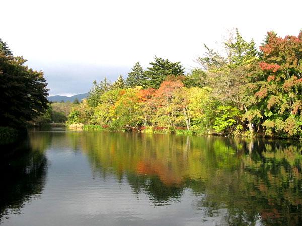 四季折々の姿で楽しませてくれる雲場池。特に人気は紅葉シーズンです。約4.6km車で約10分です。