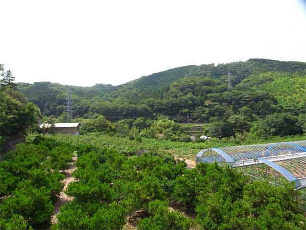 周辺は緑に包まれた畑です。のどかな風景をご覧になれます。
