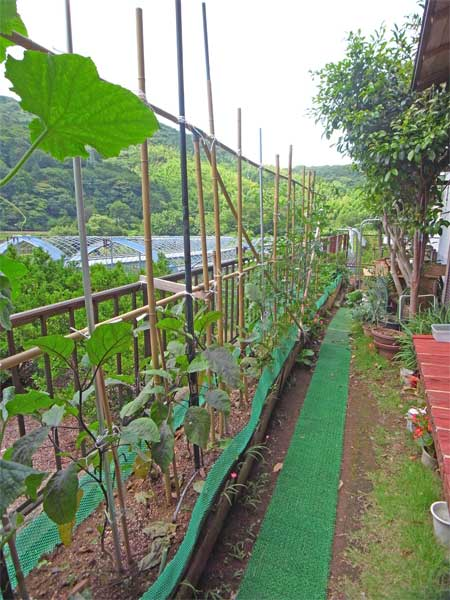 菜園、ガーデニングスペース