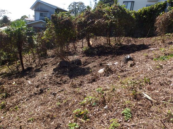 【お庭】傾斜していますのが、お庭としても利用できます。