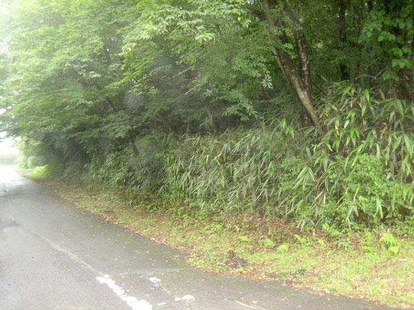 木々の緑の囲まれた閑静な分譲地内。(西道路面より)