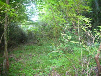 森にかこまれた静かな別荘地です。