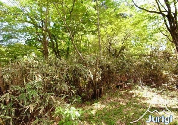 現況は、美しい木立が生える、林になっています。