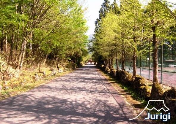 平坦な道も多いので、近隣散策も楽しいと思います。