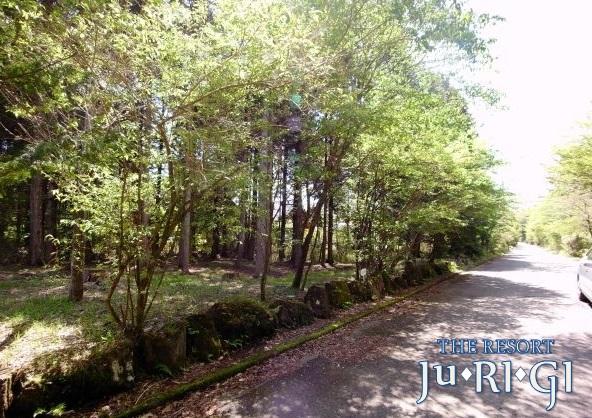 清々しい木立の有る土地で、ほぼ平坦です。