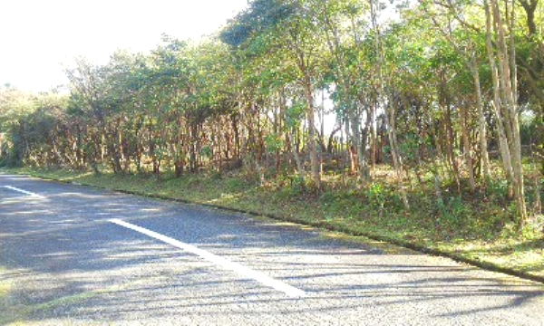 前面道路は幅員約5.3mです。道路からフラットで進入可能です。