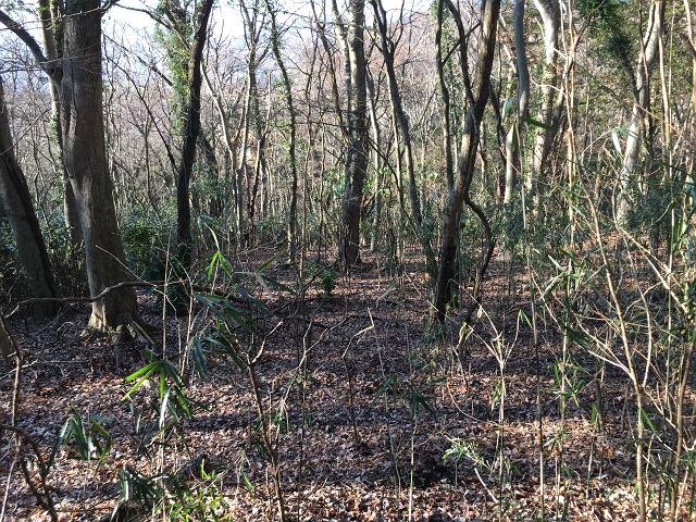 現況は山林ですがそれほど多くの木がびっしり茂っているわけではございません。