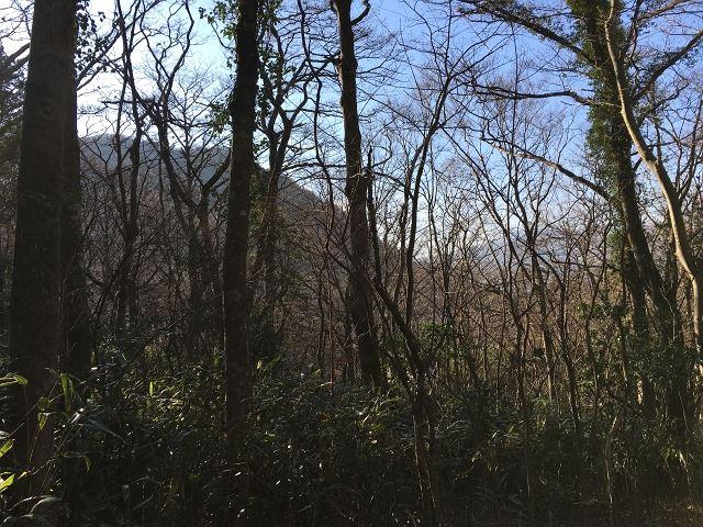 土地から西方向。木々の向こうに山並みを望みます。