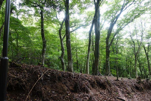 広葉樹林の広がる敷地は、雰囲気が良く癒しの空間です。